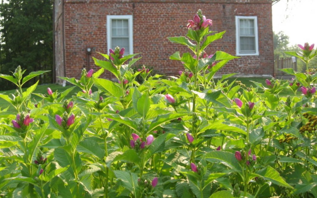 Meet Kitty Weeks, gardener & author